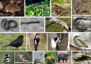 norycya-tryton-zhaba-kumka-gadyuka-midyanka-yaschirka-drizd-dyatel-muholovka-kostogryz-golub-vovchok-kaban-salamandra
